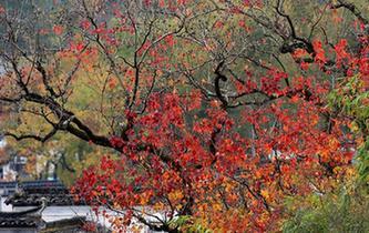 安徽黃山:塔川初冬景美如畫