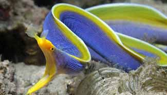 Top 10 weirdest looks of marine organism around world