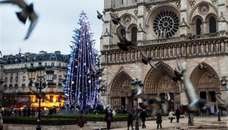Christmas tree seen in front of Notre-Dame Cathedral, Paris