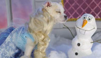 Cute doggy Cosplay Disney roles