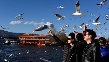 People attracted by black-headed gulls at Dianchi Lake in China's Kunming