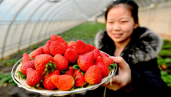 Ecofarms established to boost economy in north China's villages