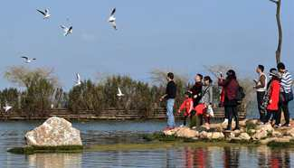 Take closer look at Dongdahe wetland park