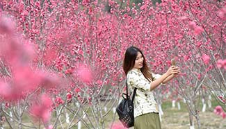 Visitors take photos on peach flower island, SE China