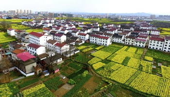 In pics: Farmland of cole flowers in NW China's Shaanxi