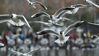 Tourists view black-headed gulls by Yange Lake in NW China city