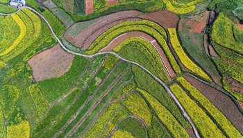 In pics: aerial photos of cole flowers in SW China's Guizhou