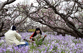 Tourists enjoy themselves under peach trees in China's Tianjin