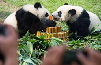 Twin panda cubs celebrate upcoming first birthday in Macao