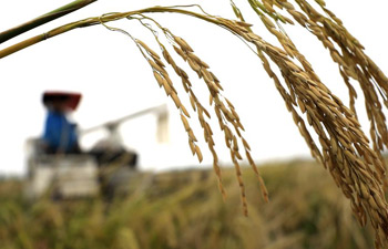 China set to see another bumper year for grain output