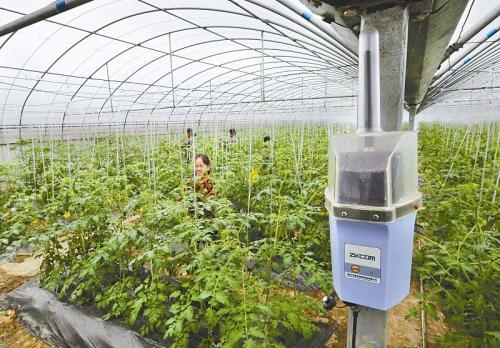 低功耗物联网助力农业智慧管理