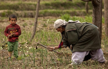 Farming starts in rural areas of Indian-controlled Kashmir