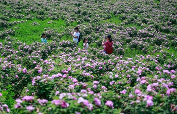 Rose industry improves economic development of small town in east China