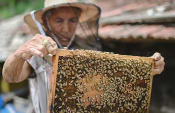 Beekeeping listed as poverty-alleviation project in China's Jilin