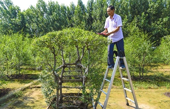 "Farmer grows trees in form of ""ecological furniture"" in China's Hebei"