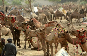 Eid al-Adha festival celebrated across world