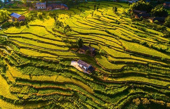 Autumn harvest in China's rural areas
