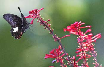Butterfly and flowers at Fuzhou National Forest Park