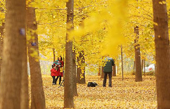 People visit forest of ginkgo trees in east China's Shandong