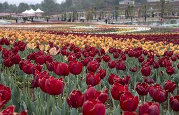 In pics: tulips in various colors at scenic area in Shaanxi