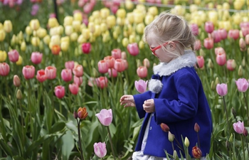 Highlights of Abbotsford Tulip Festival in Canada