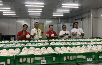 Spotlight: China's massive market breathes new life to Philippine coconut industry