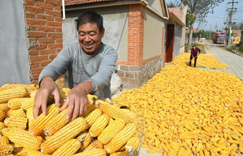 Farmers see bumper harvest in Qingdao