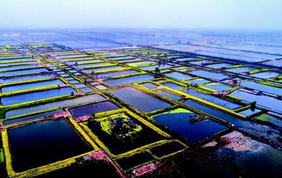 湖北潛江:退池還湖修復返灣湖國家濕地公園生態