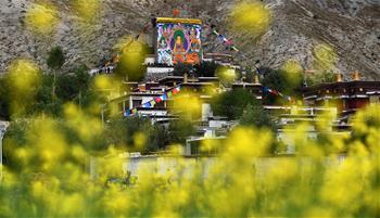 西藏扎西堅白寺展佛