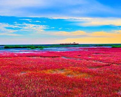 """【""""疫""""後花開 邁向詩和遠方】浪漫紅色海岸線 盤錦旅遊金名片"""