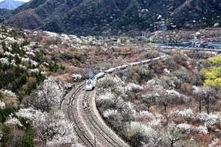 """【""""疫""""後花開 邁向詩和遠方】開往春天的列車 穿越居庸一路花海"""