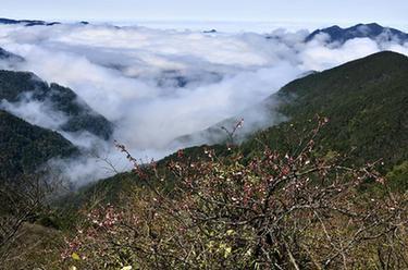 春到武夷生態美