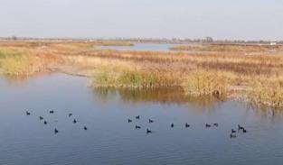 河北石家莊:濕地生態美 水鳥來棲息