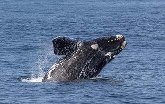 第27屆鯨魚節南非赫曼紐斯開幕