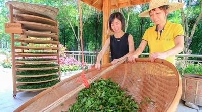 海峽茶會:茶文化體驗館開館
