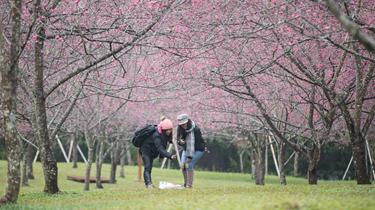 特寫:日月潭花季的美麗與憂愁