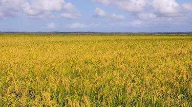 两岸农业交流聚焦产业融合