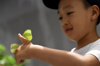 西安:暑期探索昆蟲世界