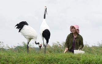 一家人與一群鶴的生死相守