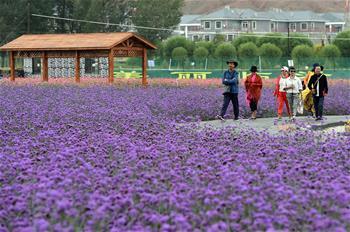 """甘肅:鄉村旅遊讓農民享受""""綠色收益"""""""