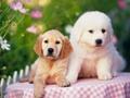 拜年途中順走寵物狗 得知價值21萬後傻眼
