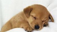暖心!寶寶睡覺 狗狗幫其蓋被