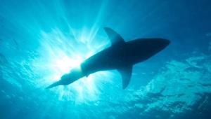 男子潛水遭遇鯊魚驚險逃生