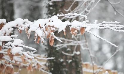 人間四月 飛雪飄落