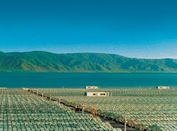 螺旋藻發現暨産業化50周年發展大會