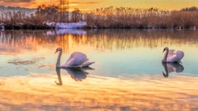 【新華圖視】天鵝湖氤氳如仙境