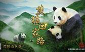 熊貓回家路