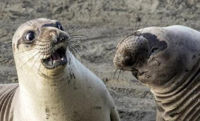 搞笑!動物也會飆演技