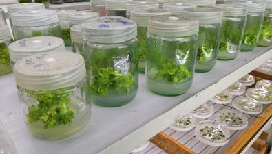 探尋神奇種子—訪昆明植物研究所
