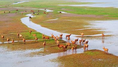航拍鹽城大豐麋鹿保護區